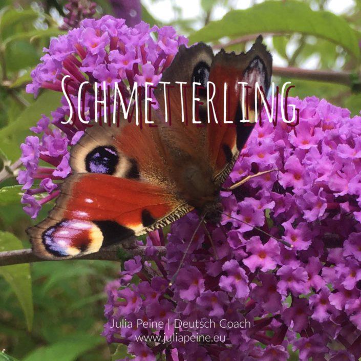 Schmetterling | De mooiste Duitse woorden | Julia Peine Deutsch Coach | Utrecht | Leidsche Rijn