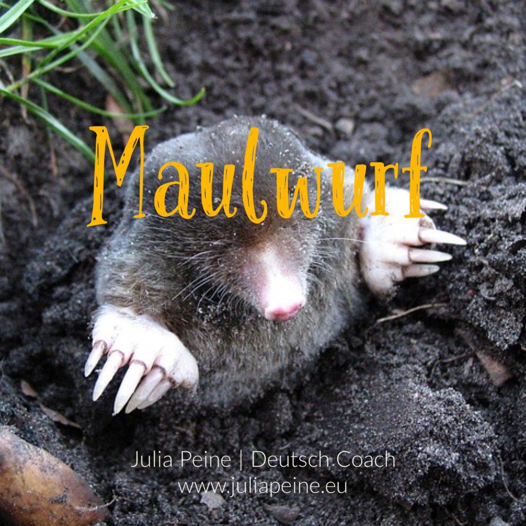 Maulwurf | De mooiste Duitse woorden | Julia Peine Deutsch Coach | Utrecht | Leidsche Rijn