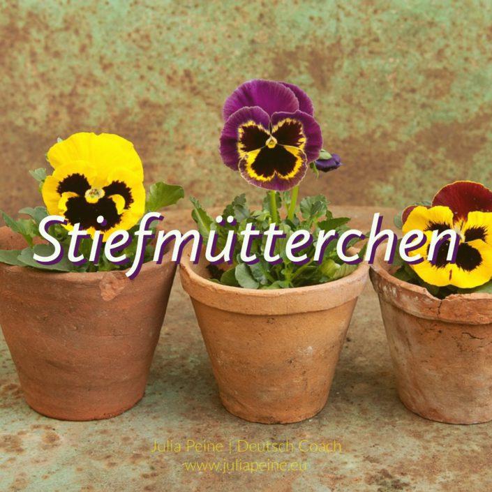 Stiefmütterchen | De mooiste Duitse woorden | Julia Peine Deutsch Coach | Utrecht | Leidsche Rijn