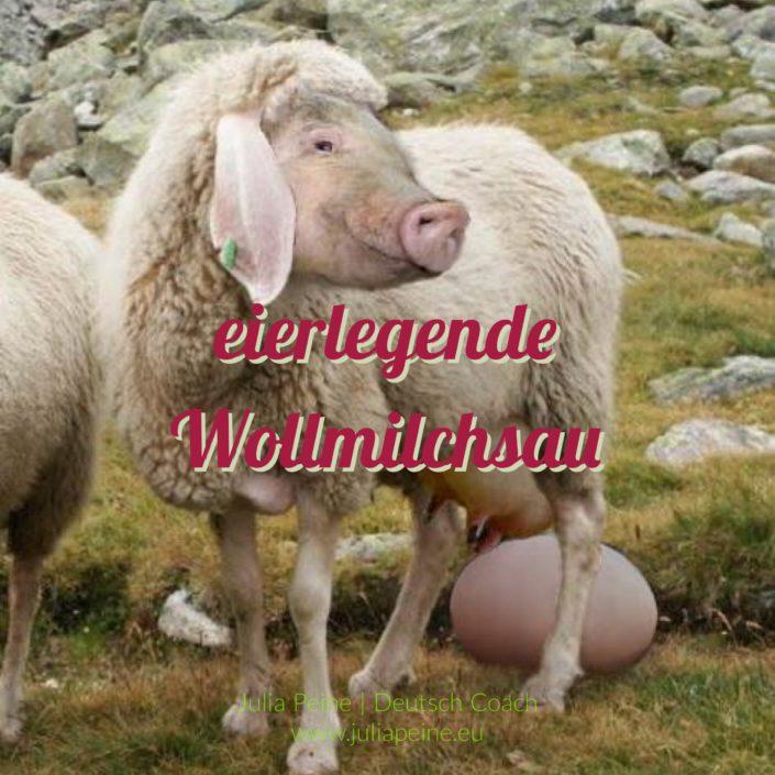 eierlegende Wollmilchsau | De mooiste Duitse woorden | Julia Peine Deutsch Coach | Utrecht | Leidsche Rijn