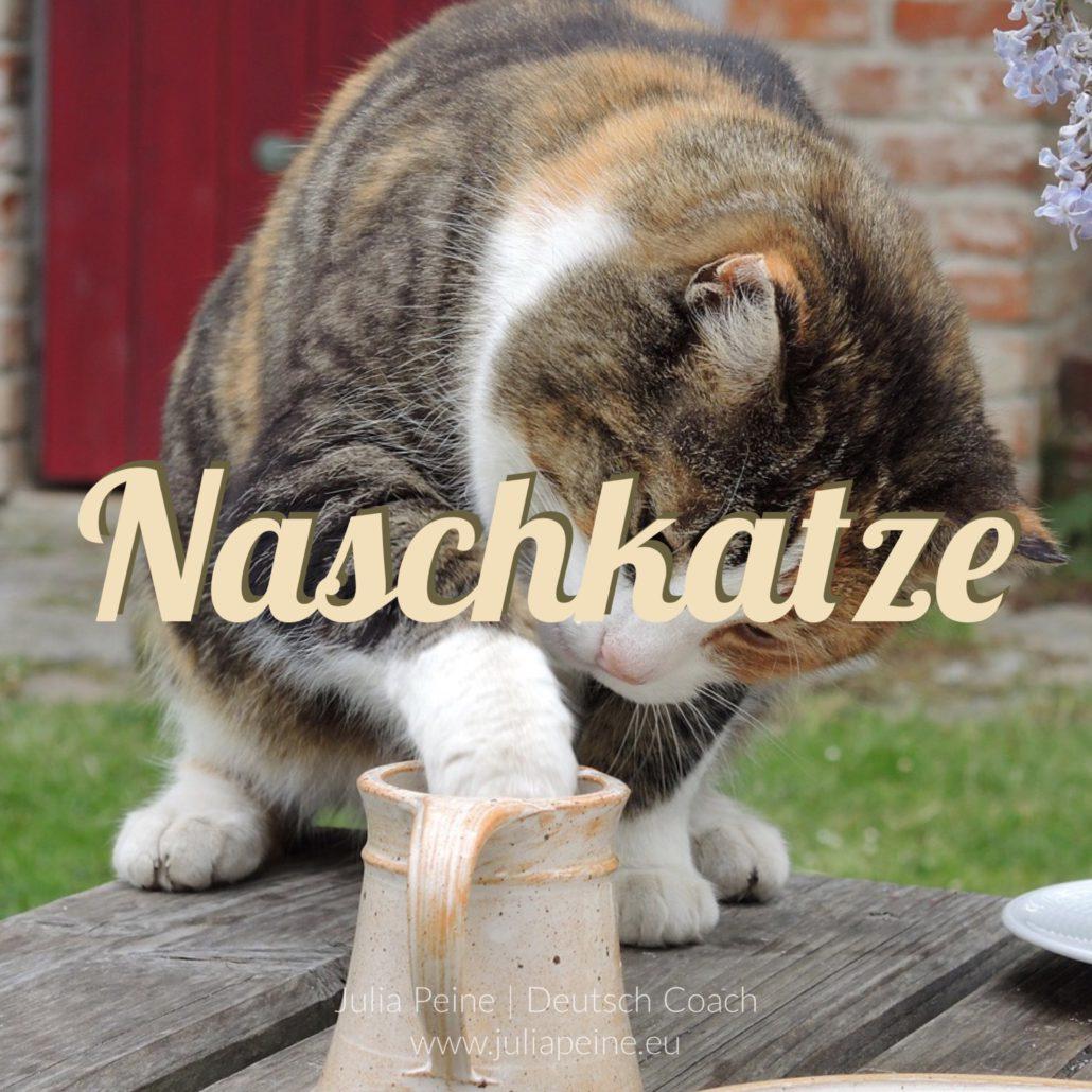 Naschkatze | De mooiste Duitse woorden | Julia Peine Deutsch Coach | Utrecht | Leidsche Rijn